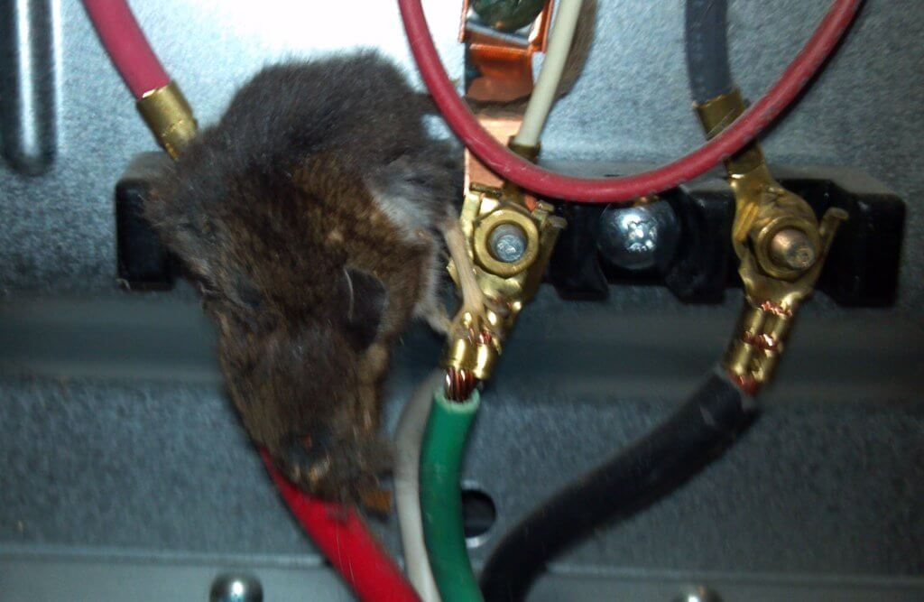 mouse damage cable in PLC
